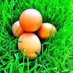 Egg Sandwich Salad Photo